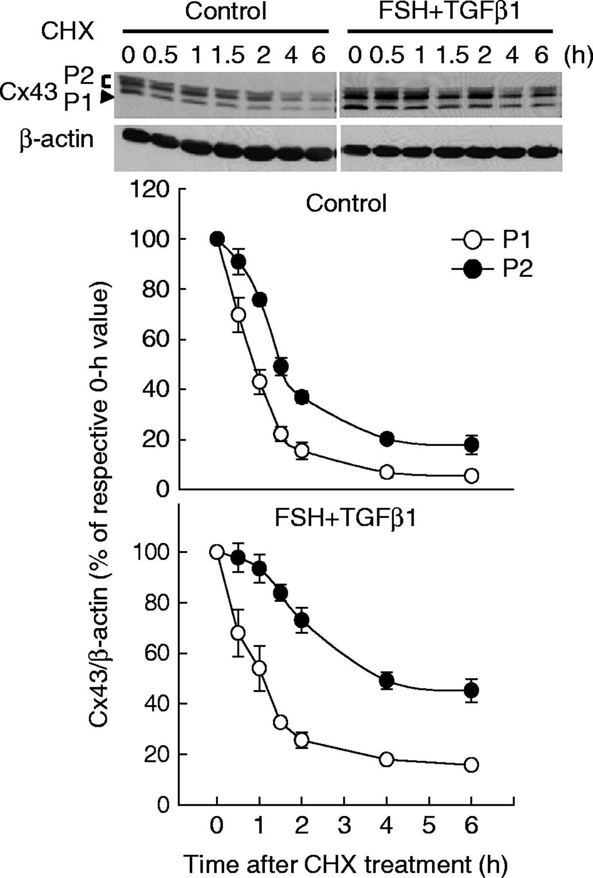 Crtc2 And Nedd4 Ligase Involvement In Fsh Tgf1 Upregulation Of H 263 Block Diagram Figure 5
