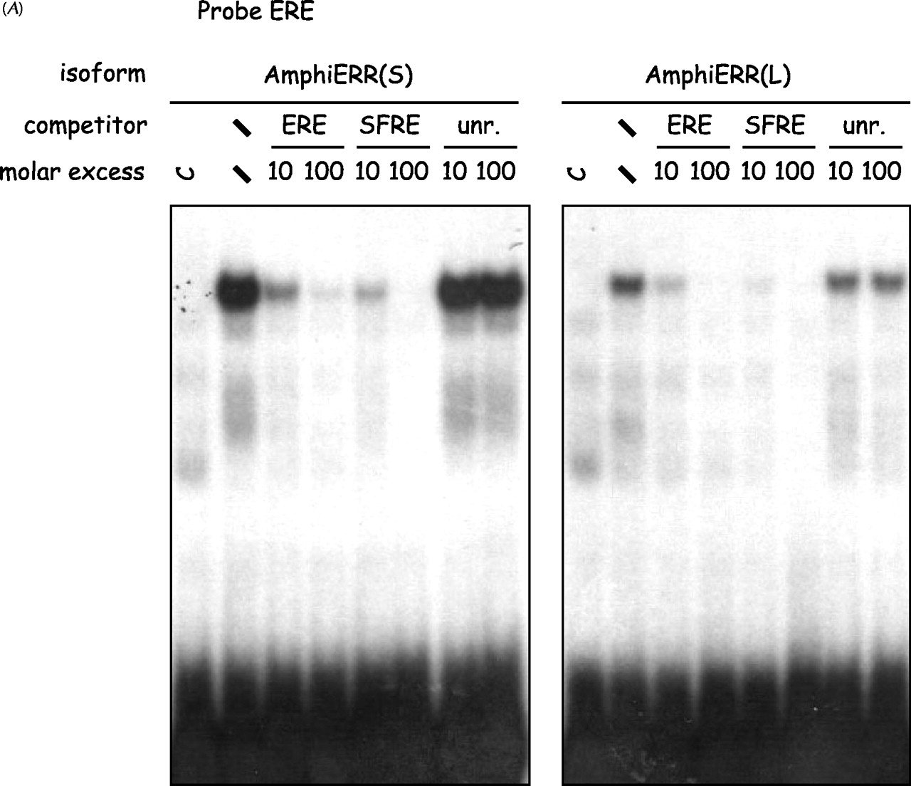 Dimerization is required for transactivation by estrogen