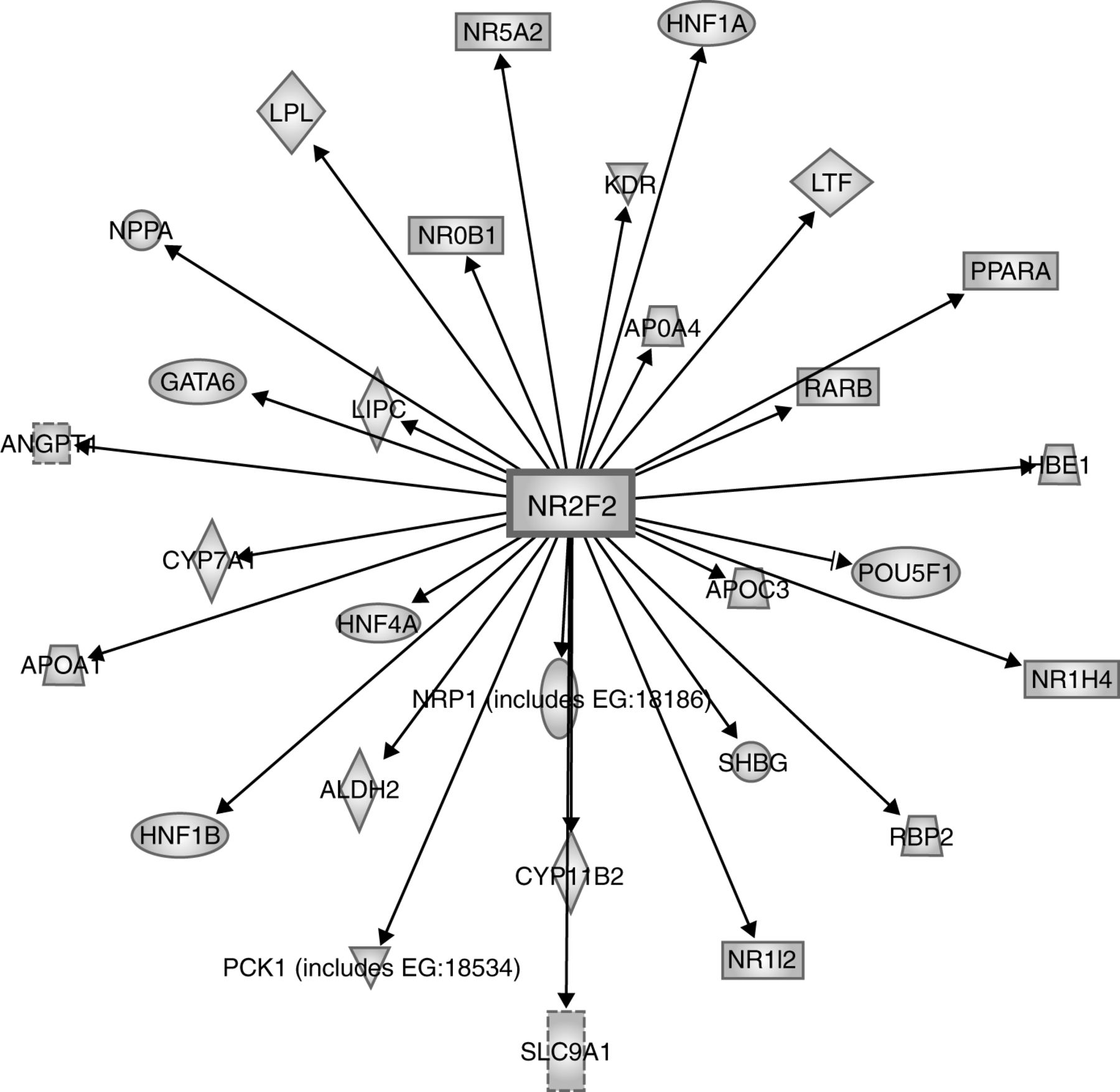 Multiple Roles Of Coup Tfii In Cancer Initiation And Progression Free Download Inf4 Wiring Diagram Figure 2