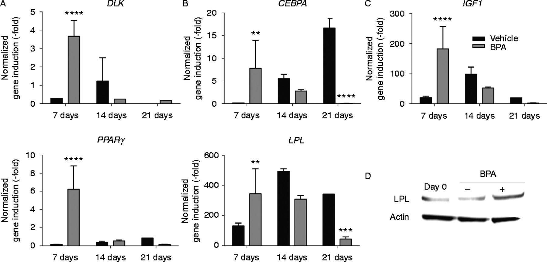 Bisphenol A enhances adipogenic differentiation of human adipose