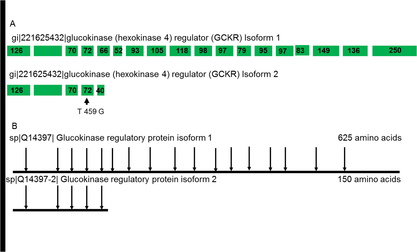 Splice Variants Reveal Connections >> Abnormalities In Alternative Splicing In Diabetes Therapeutic