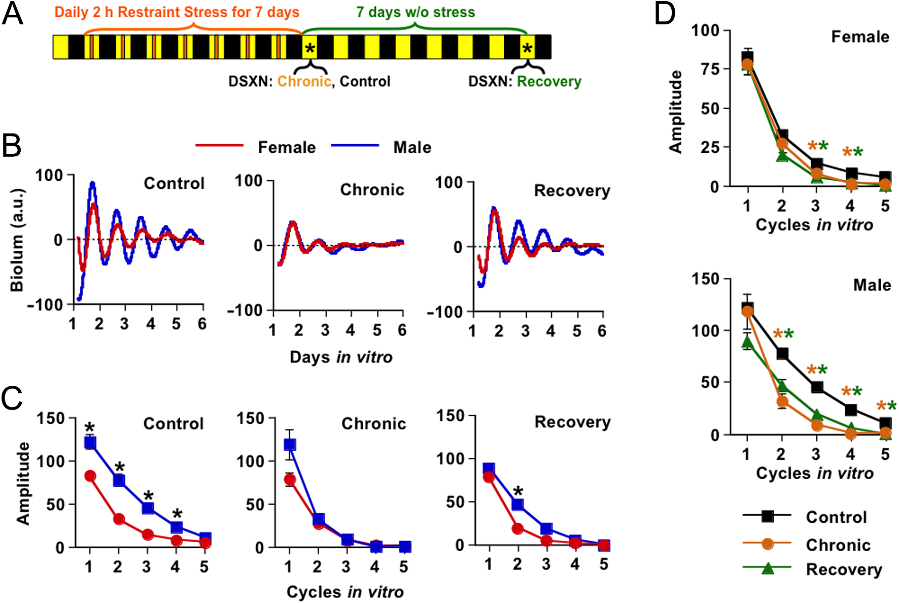 Chronic Stress Alters Adrenal Clock Function In A Sexually Dimorphic The Circuit Shown Above From Ron Js Page Is Timer Figure 1