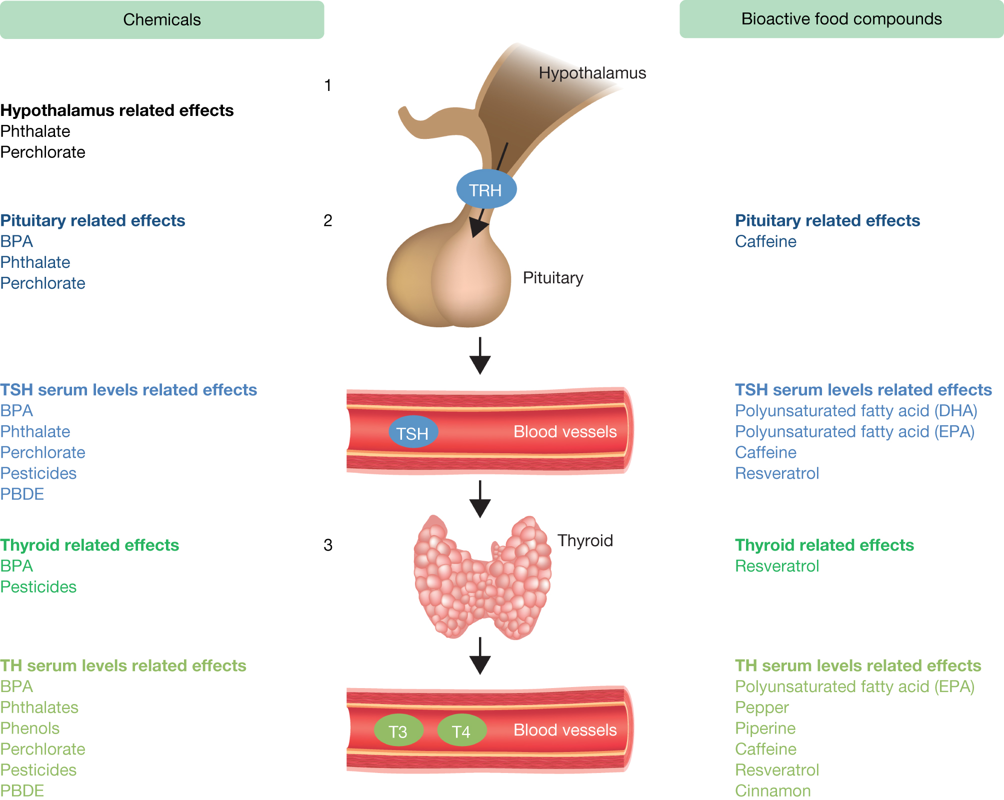 Thyroid Function Disruptors From Nature To Chemicals In Journal Of Molecular Endocrinology Volume 62 Issue 1 2019