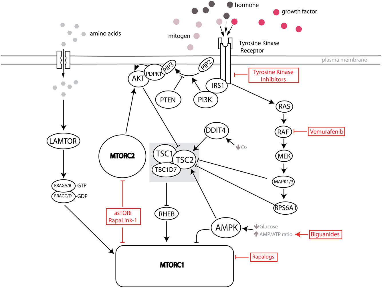 Oncogenic kinases and perturbations in protein synthesis machinery
