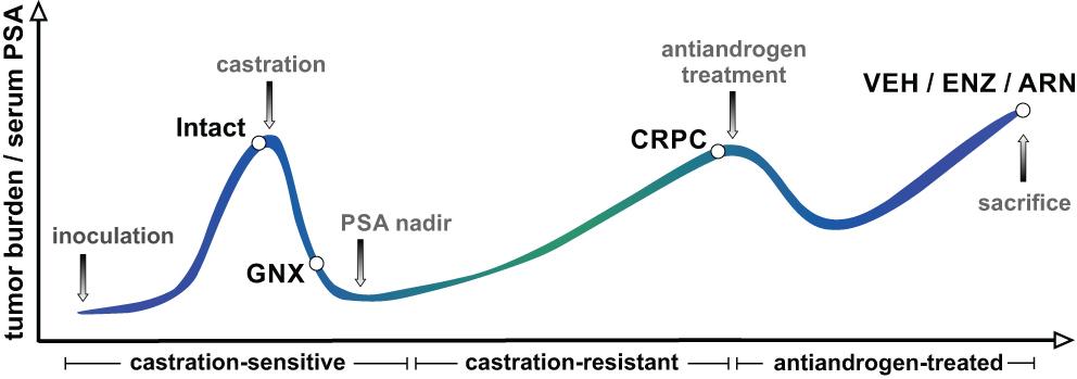 Applying mass spectrometric methods to study androgen
